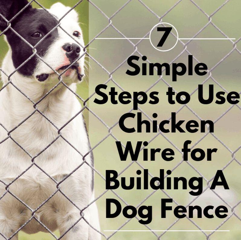 chicken wire dog fence