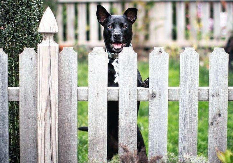 DIY picket fence