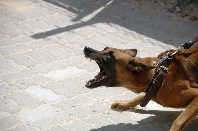behavioral euthanasia for dogs