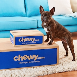 chewy-dog-sq