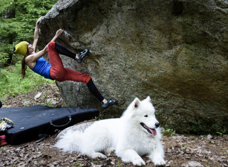 dog climbing harness