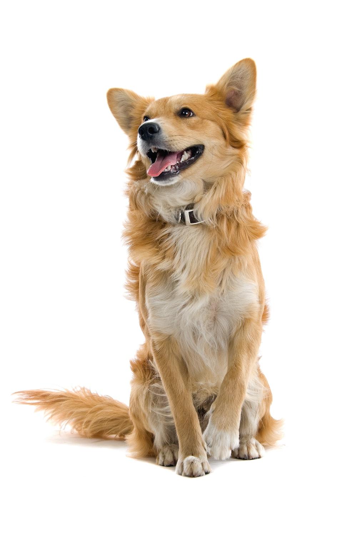 demo dog