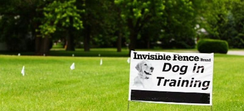 diy invisible dog fence