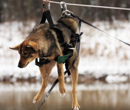 dog-rescue-harness