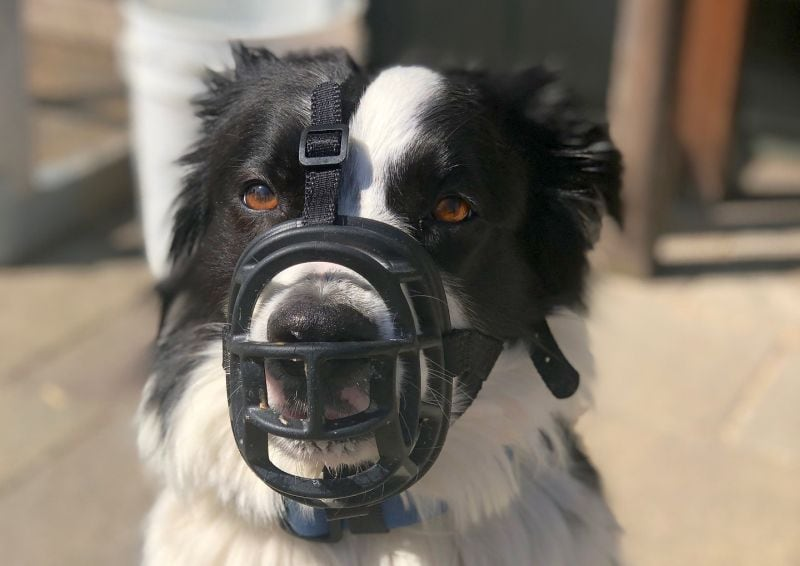 muzzles for a dog