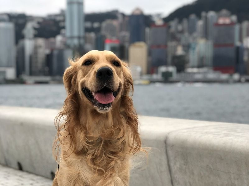 Some dogs love living in cities