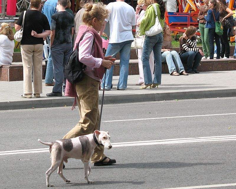 Some dogs thrive in cities