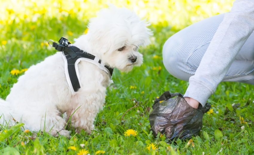 5 Best Biodegradable Dog Bags