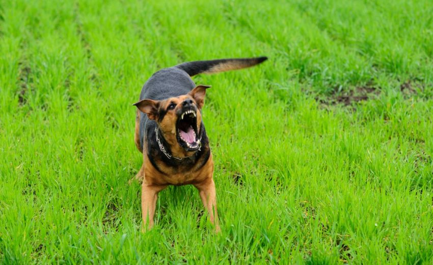 when to euthanize a dog