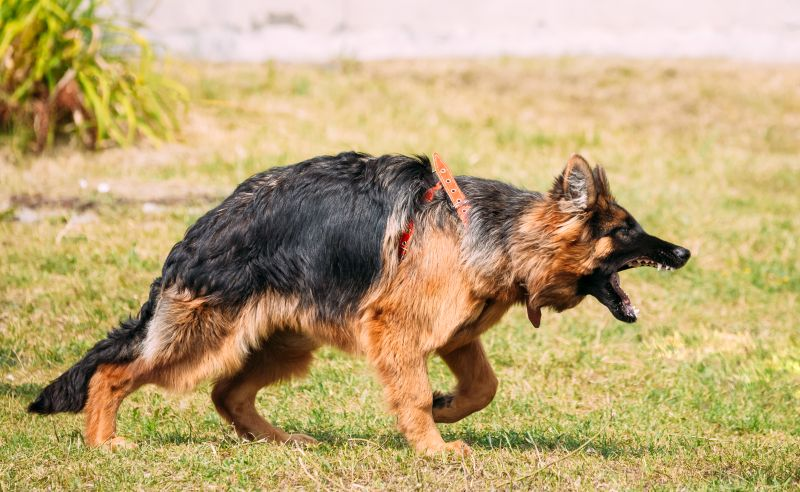euthanize a dog after biting