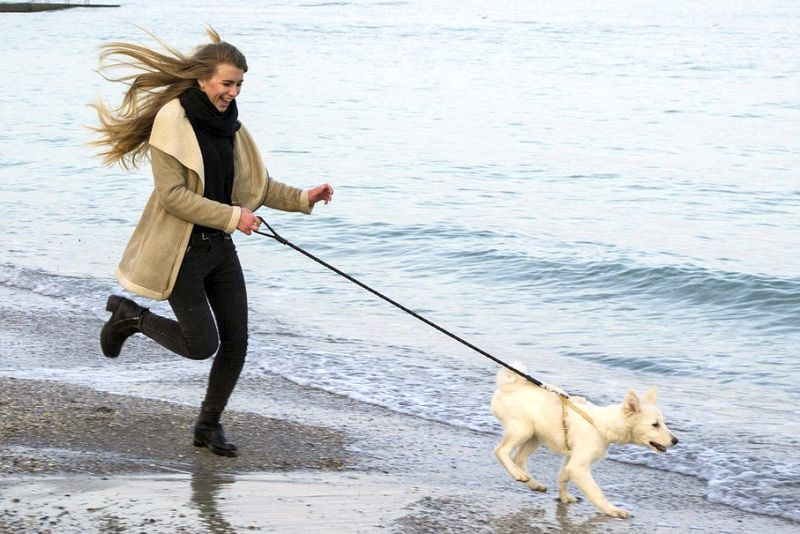 exercise helps canine stress