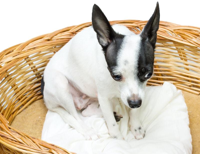 nervous dog posturing
