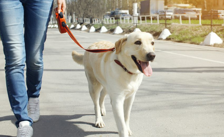 how much do dog walkers make
