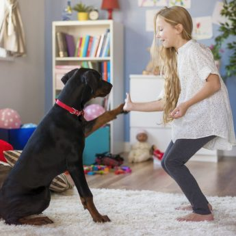 teaching kids to train dogs
