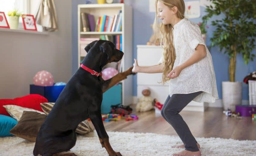 Dog Training for Kids: 7 Skills Your Kids Can Teach Your Dog!