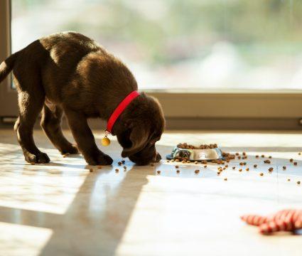 order-dog-food-online