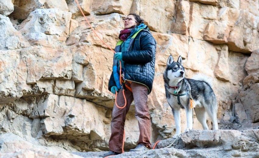 rock climbing dog harness