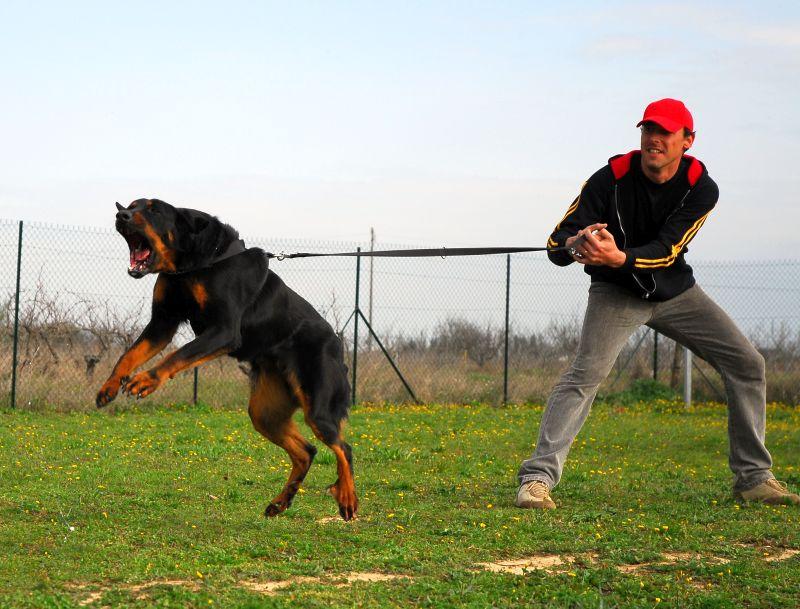 euthanasia for aggressive canine