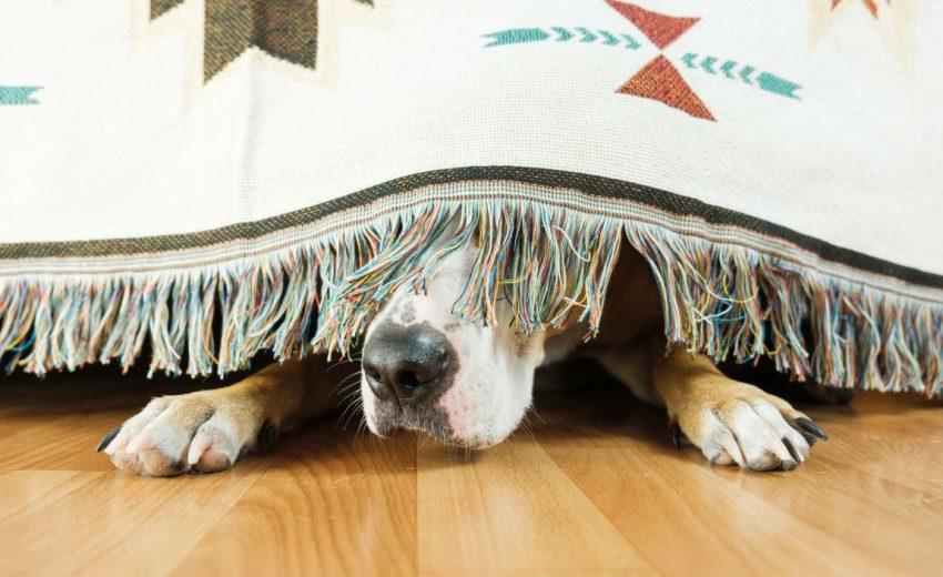 stressed dog symptoms