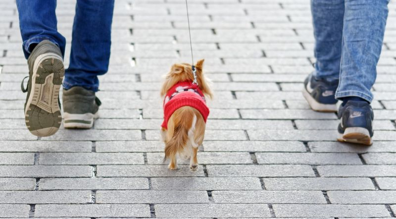Small dogs are great for cities