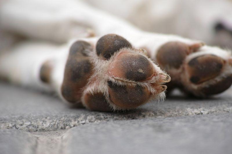 stress causes sweaty paws