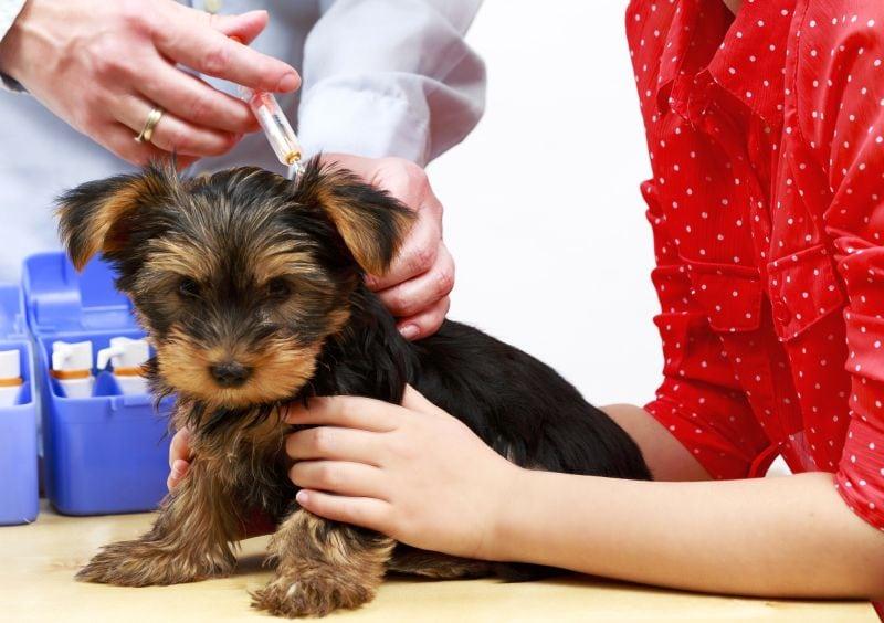 Cheap Pet Vaccines