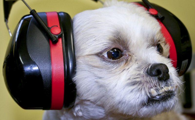 Dog ear protection