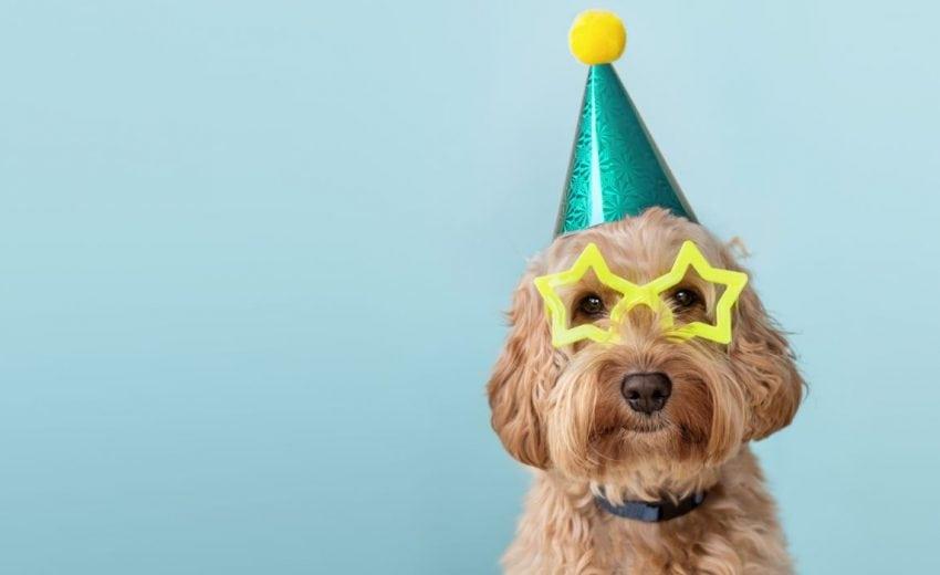 dog photo shoot props