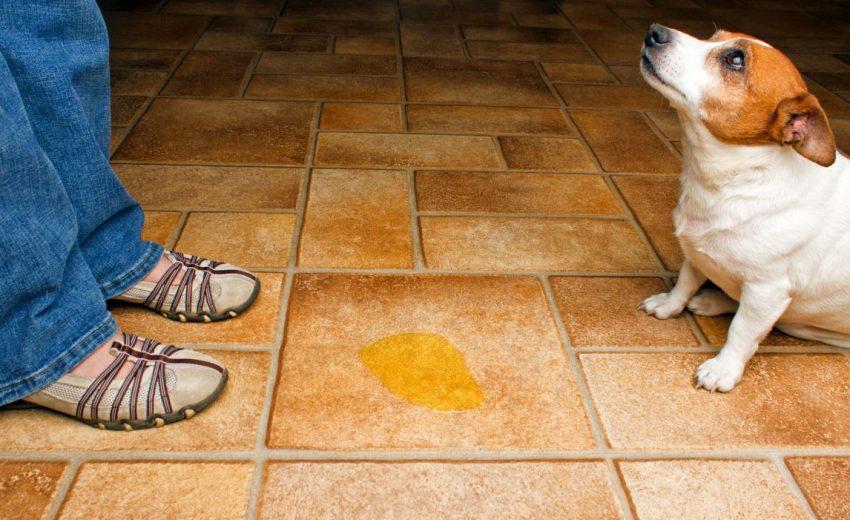 Dog Won't Pee Outside