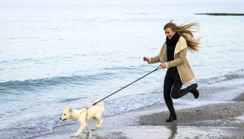 Getting your dog more exercise
