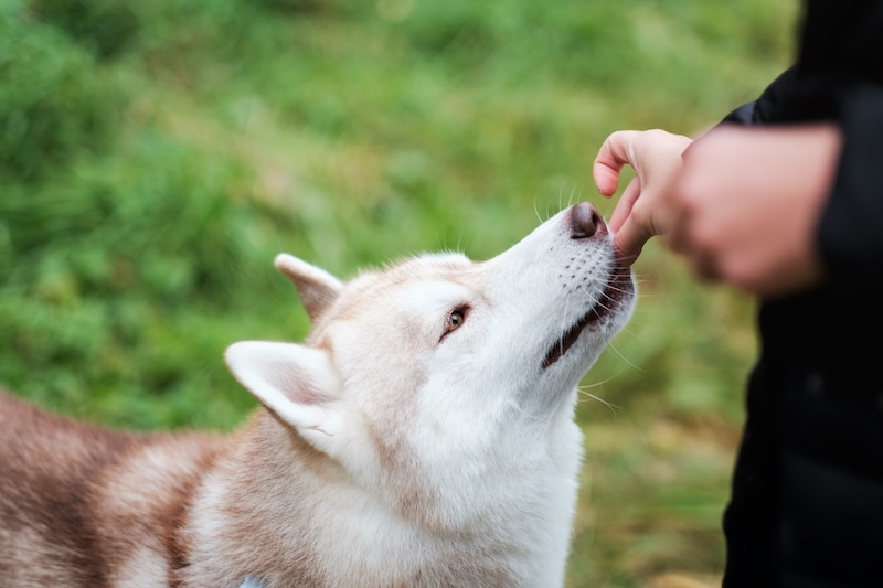 giving dog a treat
