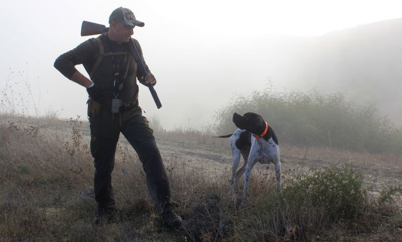 ear protection for hunting dogs