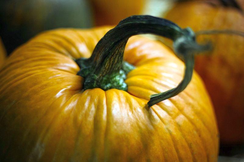 pumpkin for dog constipation
