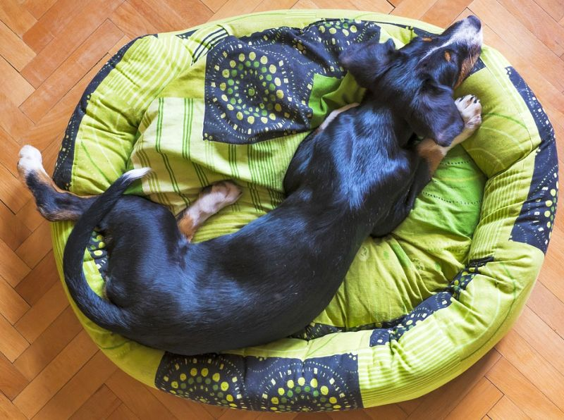 The importance of waterproof dog beds