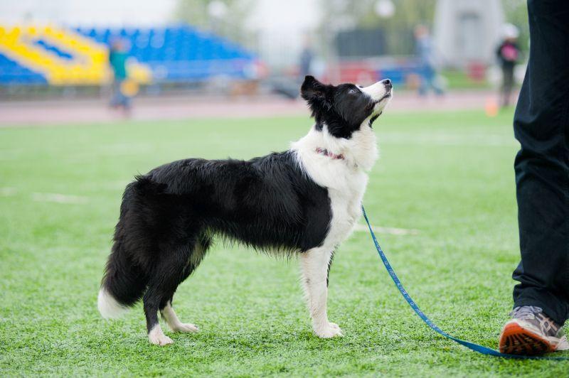 Teaching Dog to Listen Outdoors