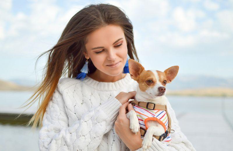 Adopting a dog online