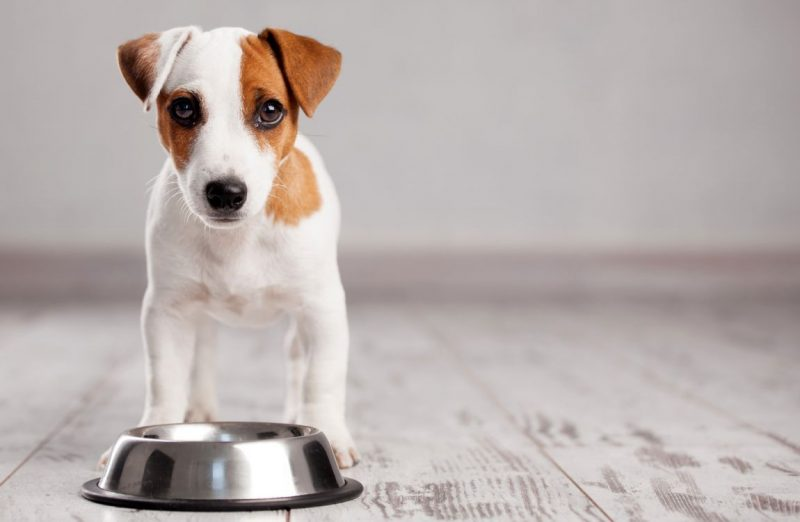 feed dogs separately in tiny houses