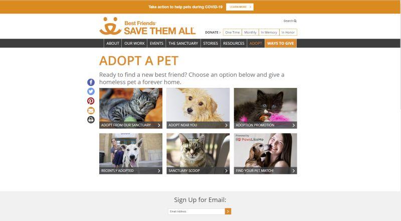 best friends animal adoption