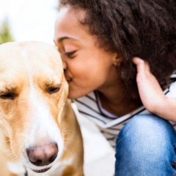 Dog adoption websites