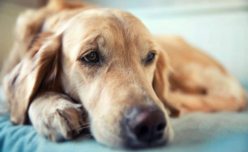 Why can't dog sleep