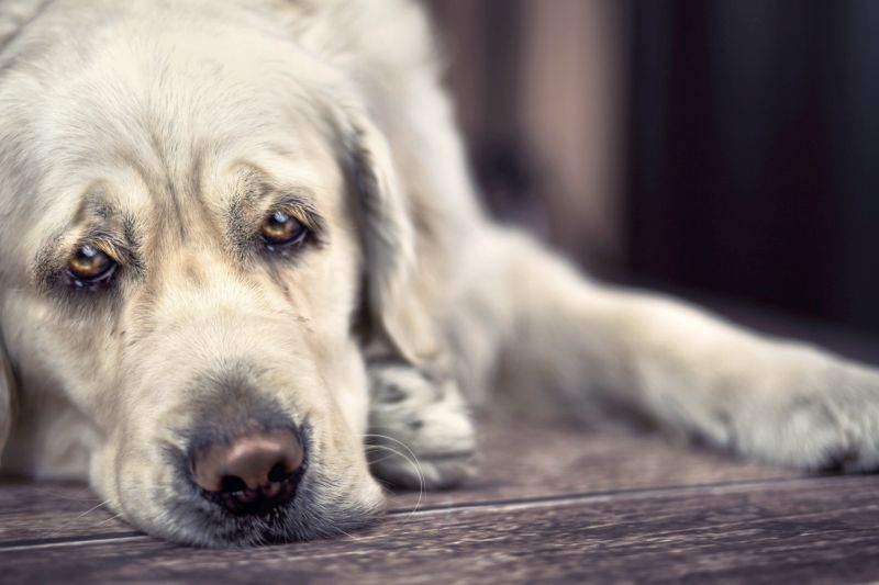 end of life dog care