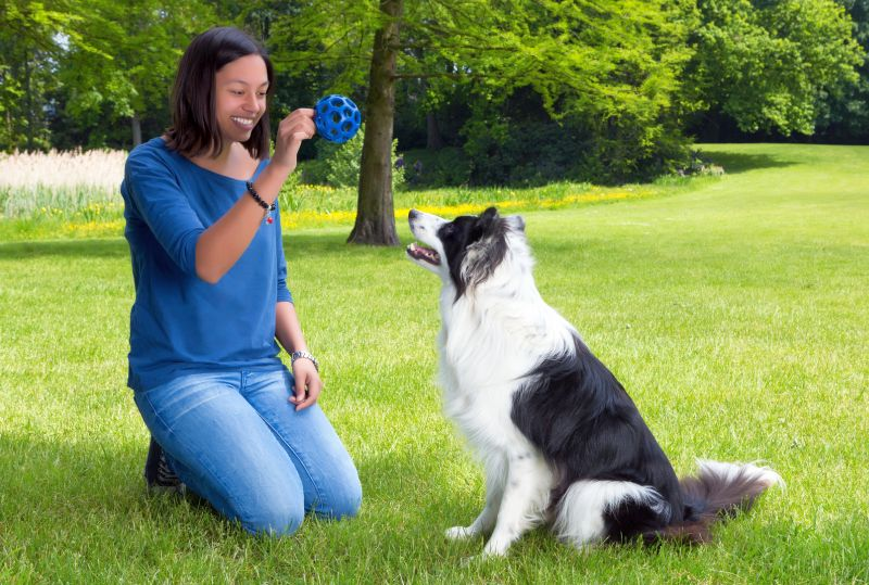 training games for dogs
