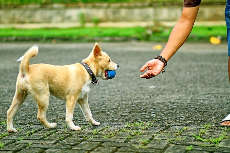 The give game for dogs