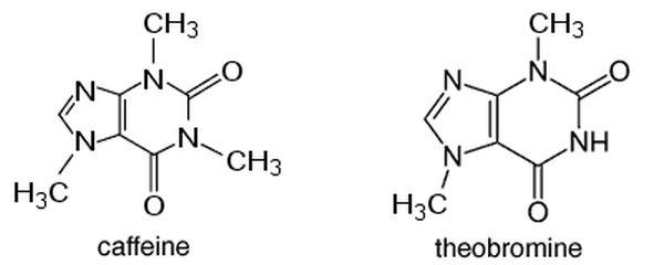 theobromine and caffeine
