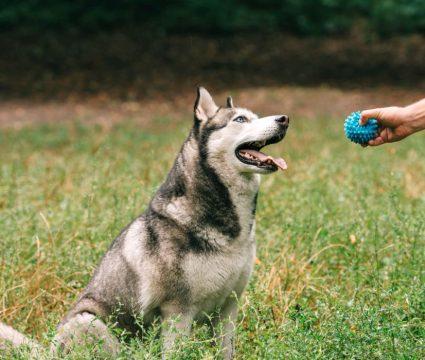 Dog Training Toys
