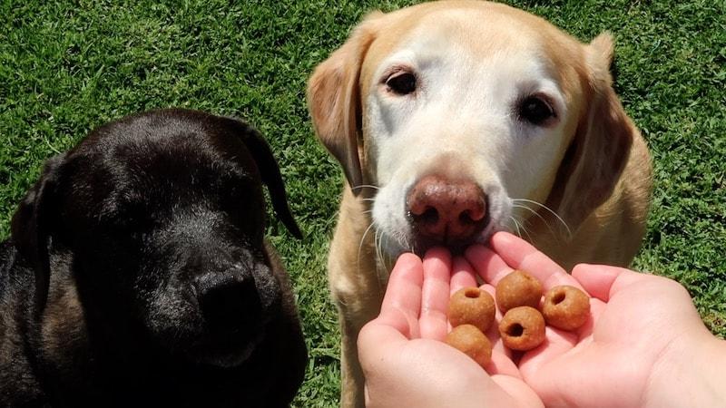 DIY pill pockets for dog medication