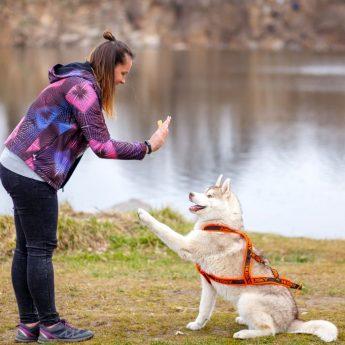 Types of dog training