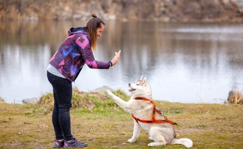 Types of dog training