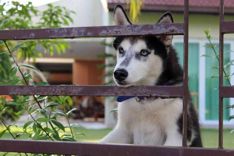 chiens qui s'éloignent