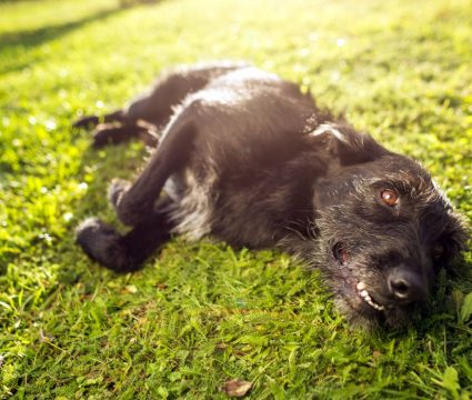 keeping dog without fence